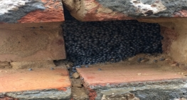 Cavity wall insulation shown in a cavity wall